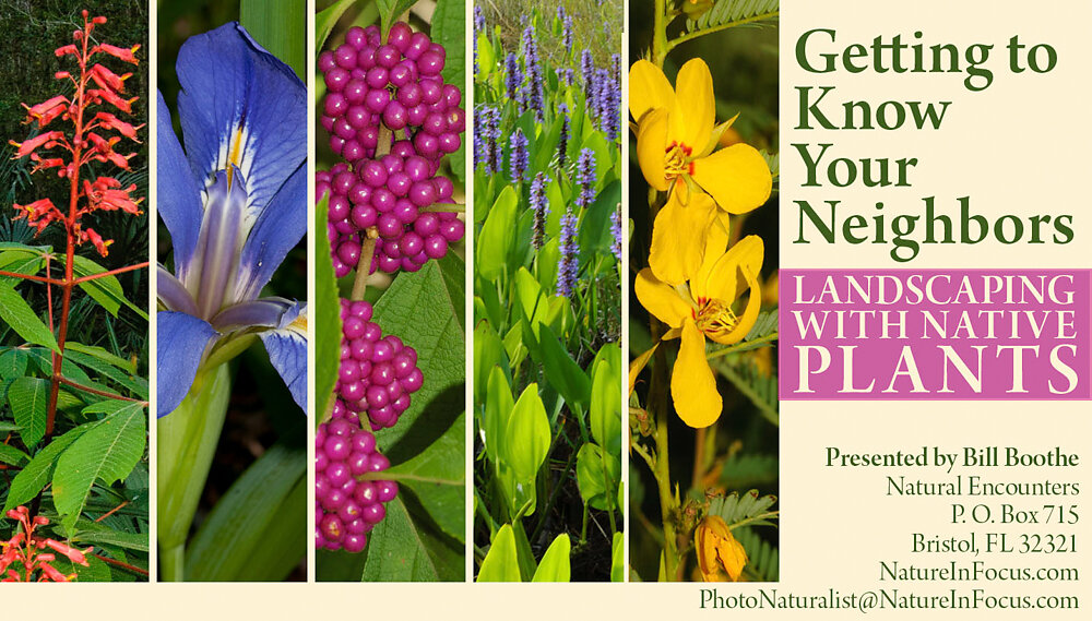 Getting to Know Your Neighbors: landscaing with Native Plants
